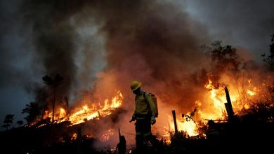 Photo of Incendios forestales encienden las alertas en Pantanal de Brasil