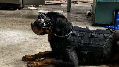Photo of Ejército de EE.UU. prueba gafas de realidad aumentada para perros que trabajan con militares