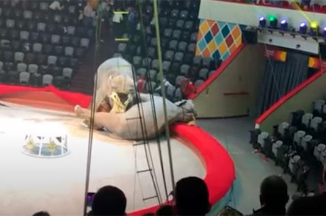 Pelea en circo en Rusia